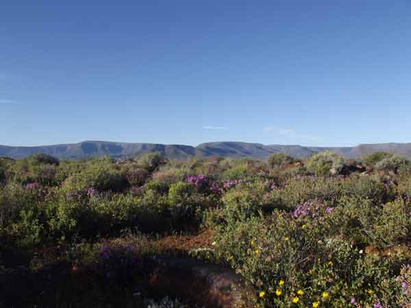 The Tankwa Karoo is big sky country and in spring there are colourful flowers. Photo by Joan Kruger.