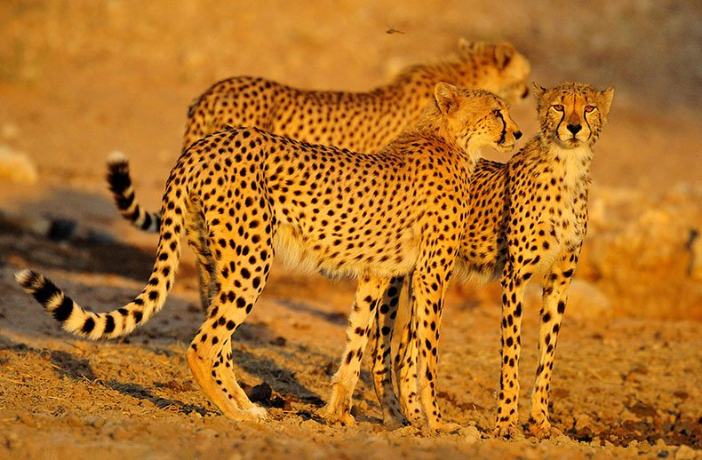 The Photographer's Guide to the Kgalagadi Transfrontier Park-Court Jenny and Mario Fazekas