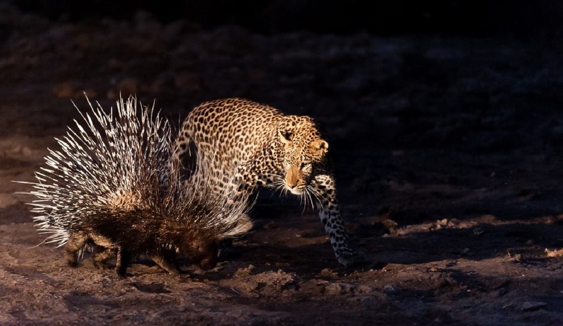 Leopard photography-Shem  Compion
