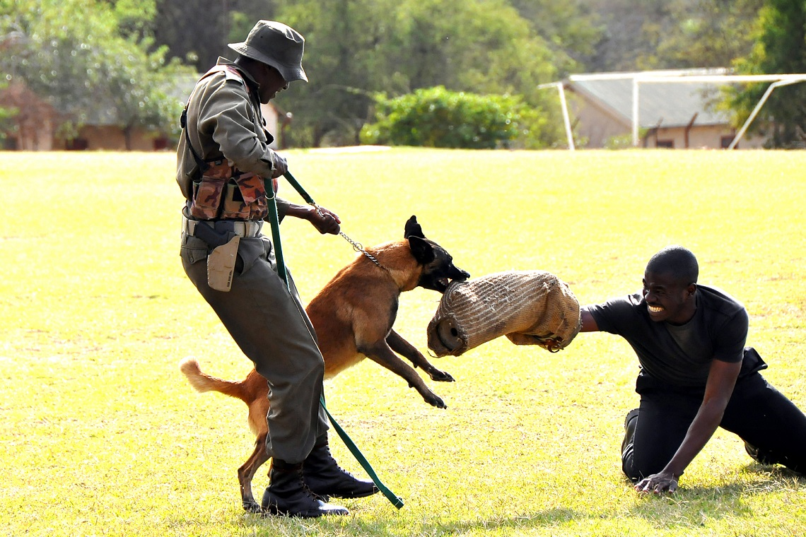 Canine unit-Kruger National Park-CourtSANParks-3