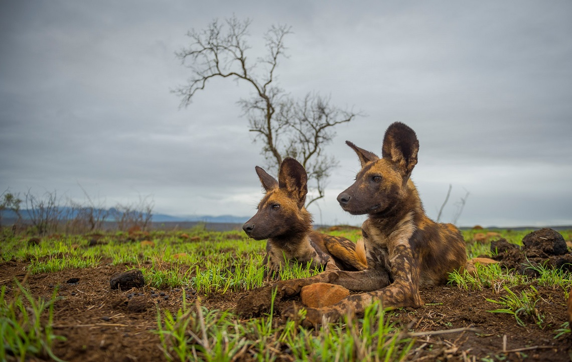 c984a666a5 Wildlife Photographer of the Year  Young finalist shares his vision ...
