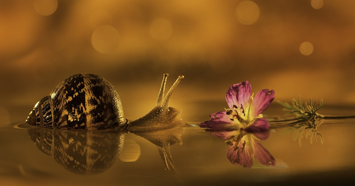 Macro photography-Marcus Jooste-Vincent the snail-2