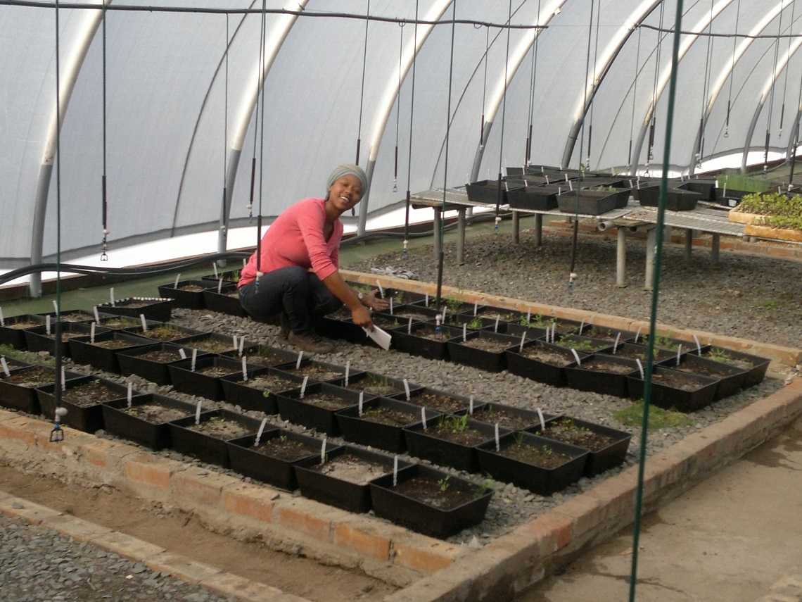 Tokai Seedbank Project-TMNP-green house-Zishan Ebrahim