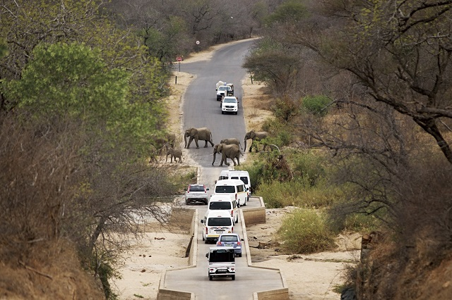 Elephant road block, H1-2