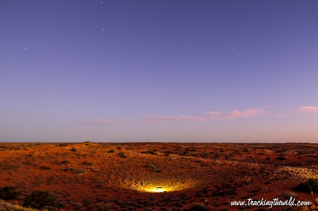7 KieliekrankieWaterholeAtNight-Tracking the Wild-Nov2015