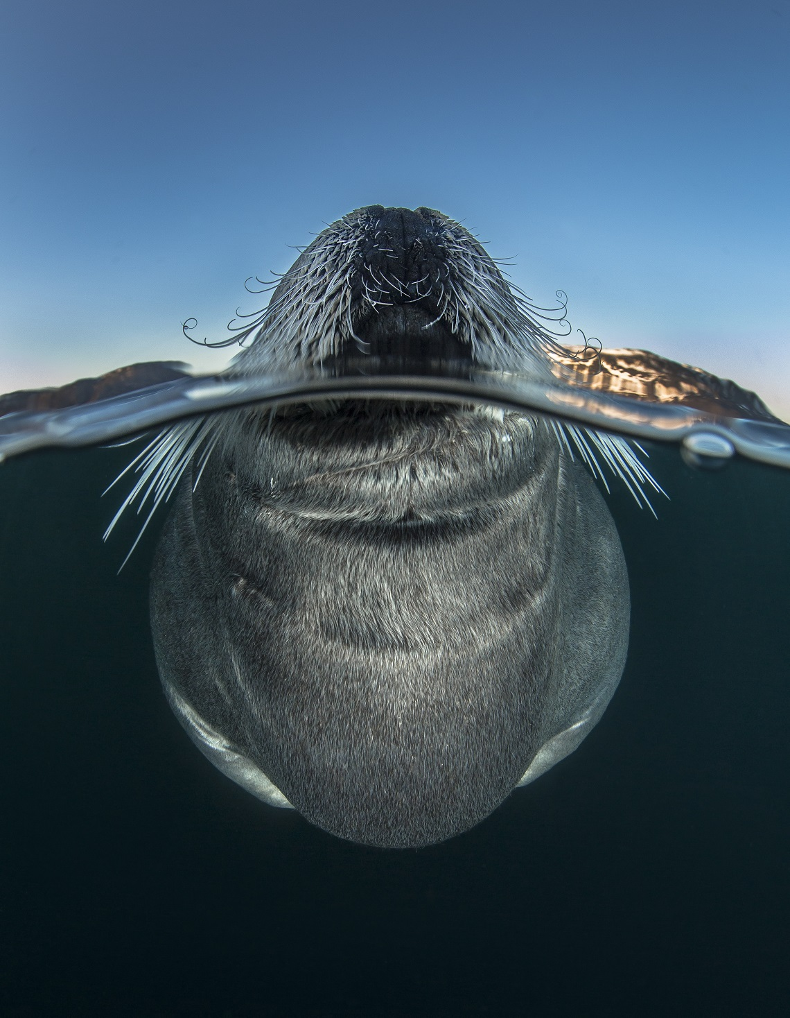 Wildlife photographer of the year-Audun Rikardsen
