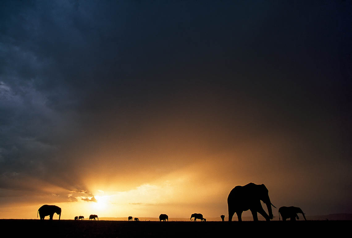 Elephant herd grazing at sunset by Jonathan and Angela Scott. They are among the International wildlife photographers who will be sharing their photo knowledge at this year's Wild Shots event.